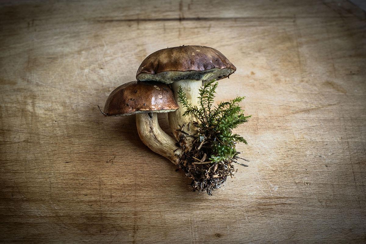 Herkulliset tatti sienet pöydällä