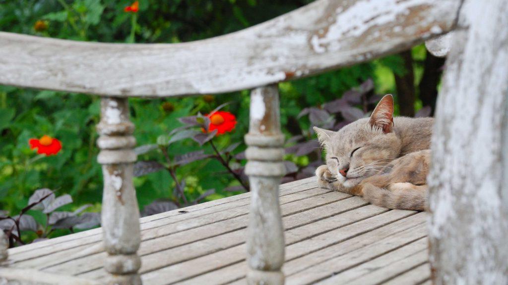 Kissa nukkuu puistonpenkillä ja näkee selkounta
